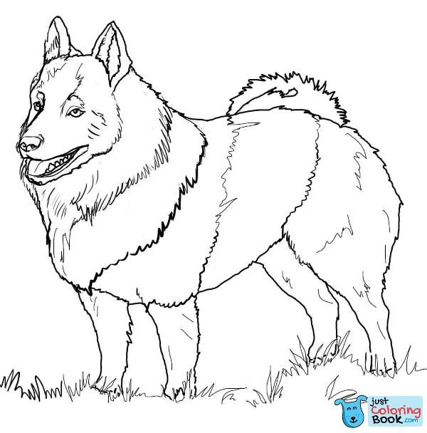 American Akita Coloring Page Free Printable Coloring Pages For American Akita Coloring Pages Dog Coloring Page Dog Line Drawing Schipperke