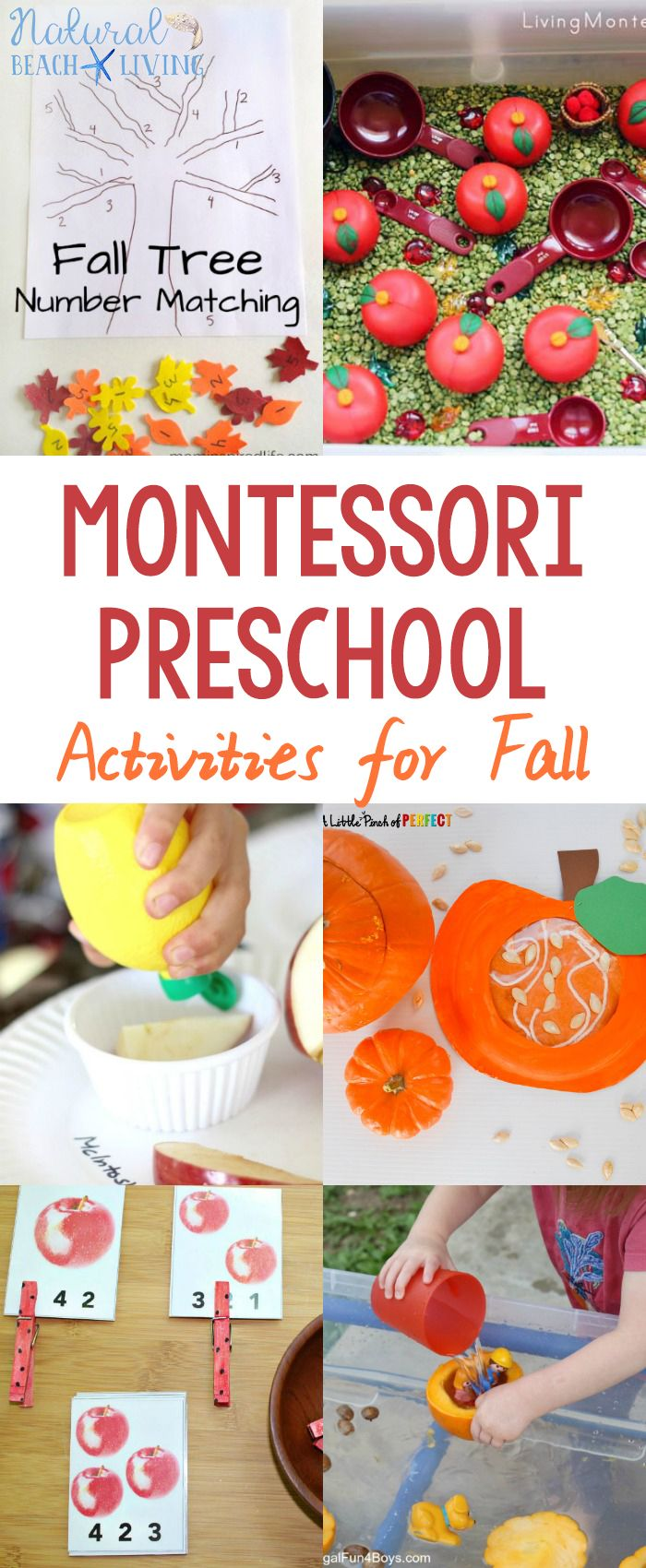 30+ Amazing Montessori Fall Activities for Preschool and Kindergarten, Montessori Fall Practical Life, Montessori Books, Montessori Printables, Montessori Themes #Montessori
