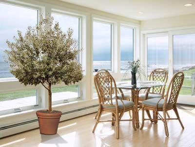 Healthy, Versatile Olives... Indoors!