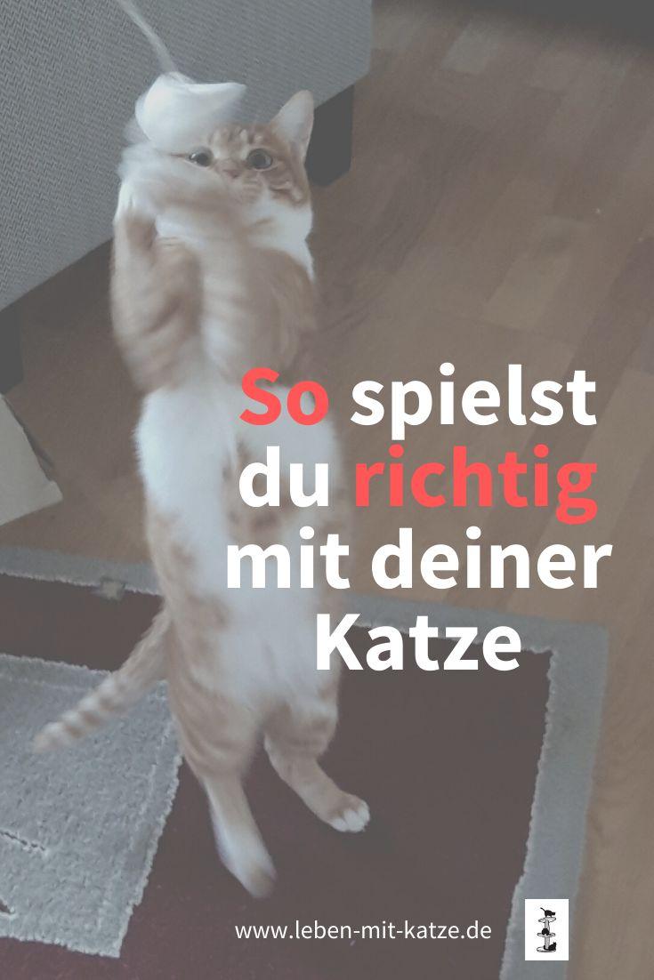 Katzen Spiele Kostenlos Anmelden