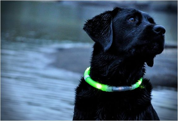 GLOWDOGGIE: Led Dogs, Best Friends, Led Collars, Late Night, Black Dogs, Pet, Lights Dogs, Dogs Collars, Black Labs
