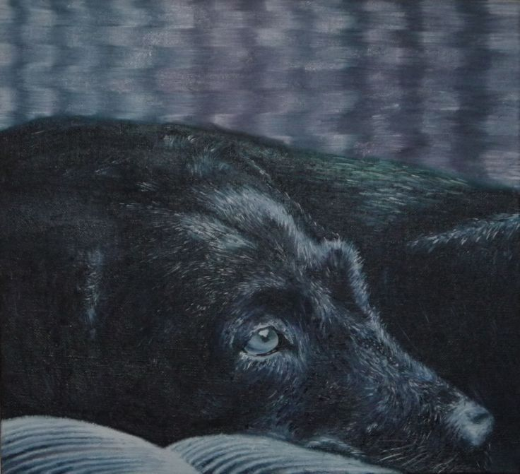 This is a painting I did of a dog using oil paints. Created by Sarah Fenn