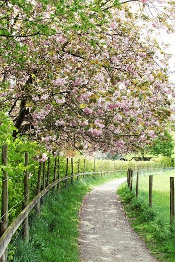 Country Living ~ Footpath to Grasmere, Lake District, England. | Grantchester, as seen on Masterpiece PBS