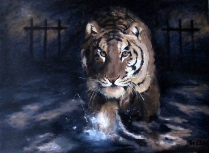 Tiger 1   finished!. Acrylic on canvas 40' x 30'  This is from the series ' Prey Or Predator? ' painted recently in aid of the Auckland Zoo Conservation Trust. The Curator has chosen it for the invitation to the Opening......12 days to go!