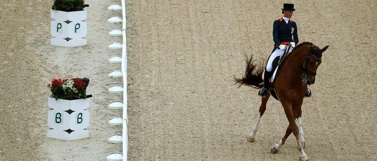 Noticias ao Minuto - Amazona da Holanda desiste da Rio-2016 para proteger cavalo