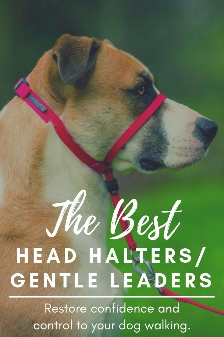 Best Dog Head Halters And Gentle Leaders Reviewed In 2019 Gentle