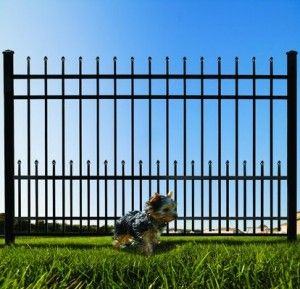 Iron Fence with Puppy Panels. Perfect for keeping small dogs in your yard, or small neighborhood animals out.