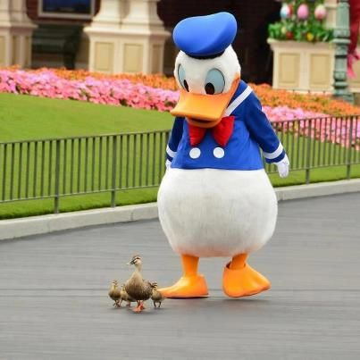Donald Duck takes a moment to visit with family! An adorable photo. #Disney #DisneyWorld