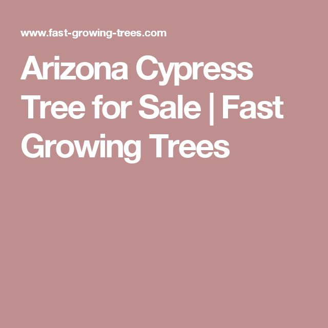 Arizona Cypress Tree for Sale | Fast Growing Trees