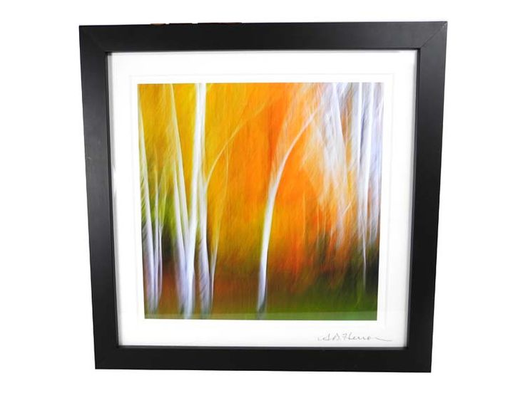 """Birch 660g sq 