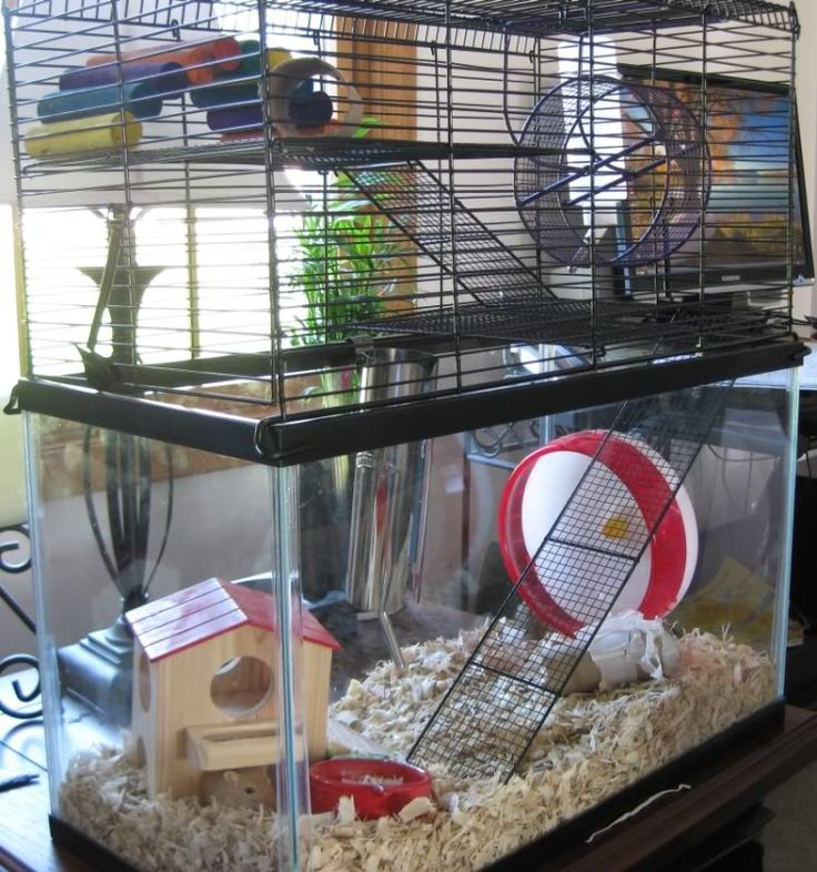Housing gerbils has been an experience at the shelter. We're still improving our setup.. a topper on our aquarium (similar to this) would be pretty cool.