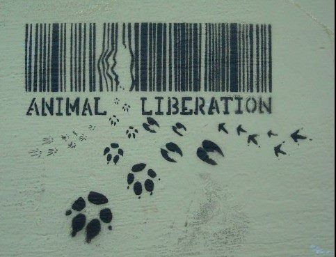 "Animal liberation . . . because WE are sentient, living beings ~ not products. ~ ""The Animal Spirits"" www.facebook.com/TheAnimalSpirits"