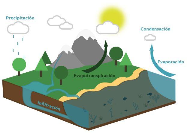 El Ciclo Del Agua También Conocido Como Ciclo Hidrológico Tiene Cinco Etapas Evaporación Condensación Pr Ciclo Del Agua Ciclo Hidrologico Molecula De Agua