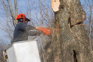 Highly reputable tree contractor in Kennesaw, GA - Aspen Tree Experts. We can cover your tree service needs. Call: (404) 405-3910 and you won't regret it!