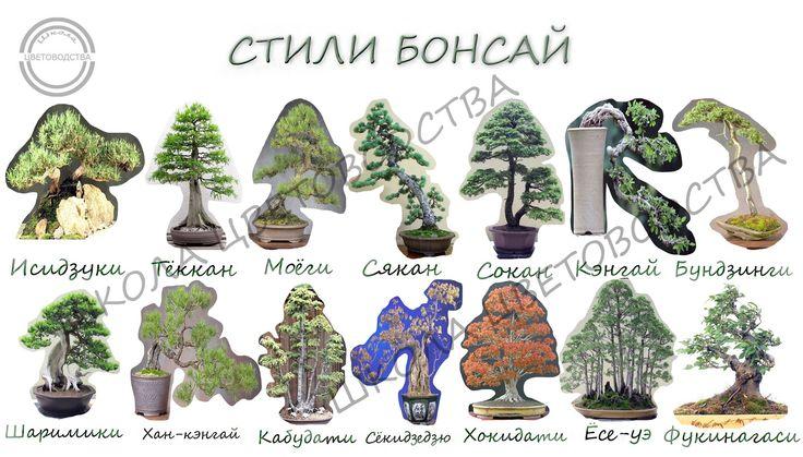 СТИЛИ БОНСАЙ  Речь пойдет о стилях бонсай, которых насчитывается более 30-ти. Среди этого богатого разнообразия можно выделить традиционные стили, ориентирующиеся на внешний вид различных деревьев, произрастающих в естественных условиях.  1. Тёккан - формальный вертикальный стиль, характеризующийся прямым стволом, широким у основания и зауженным ближе к вершине. Классический бонсай подходит практически для всех типов и видов деревьев. Символизирует гордое одиночество и несгибаемую жизненную…