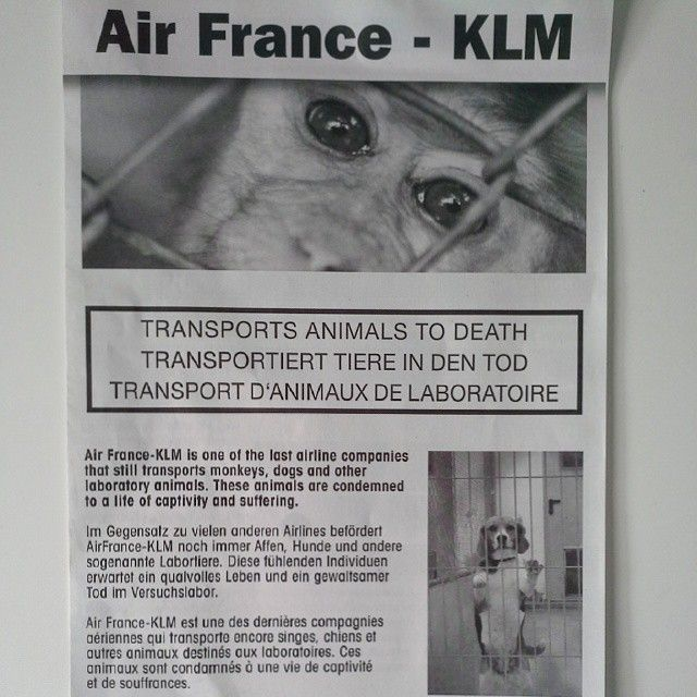 I was on the #airport #berlin #tegel ... a #demonstration against #animalcruelty #transport to #death ... #klm #airfrance ... #information under www.stopvivisection.net or www.gatewaytohell.net #gatewaytohell #hell #stop #vivisection emojiemojiemoji