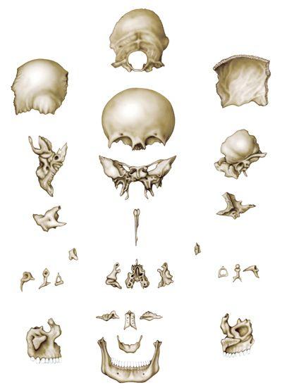 25 melhores ideias de Dibujos de huesos no Pinterest  Ossos do