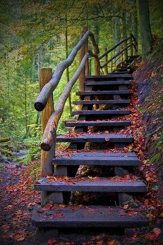fall, leaves, nature, orange, pretty, stairs