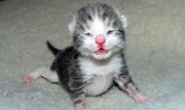 When Do Kittens Open Their Eyes Cat Care Newborn Kittens Kitten Eyes