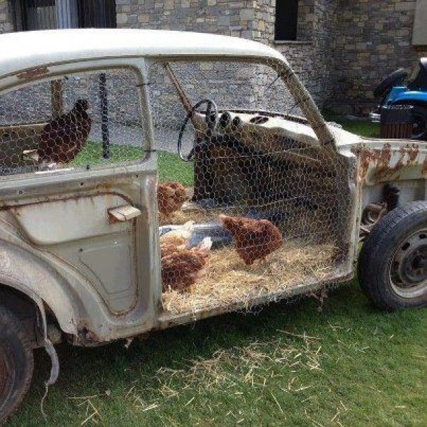 Junk car as chicken coop - awesome!