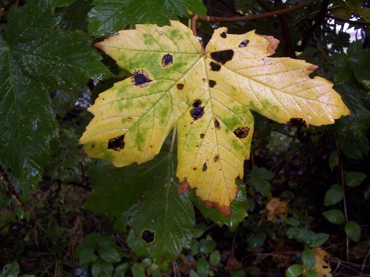 Autumn Solstice 2005, leaf.