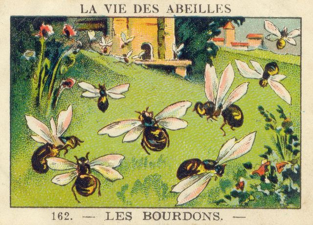 ≗ The Bee's Reverie ≗ vintage bee illustration