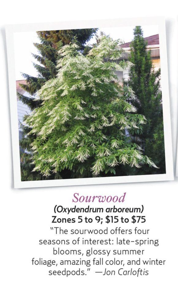 Sourwood