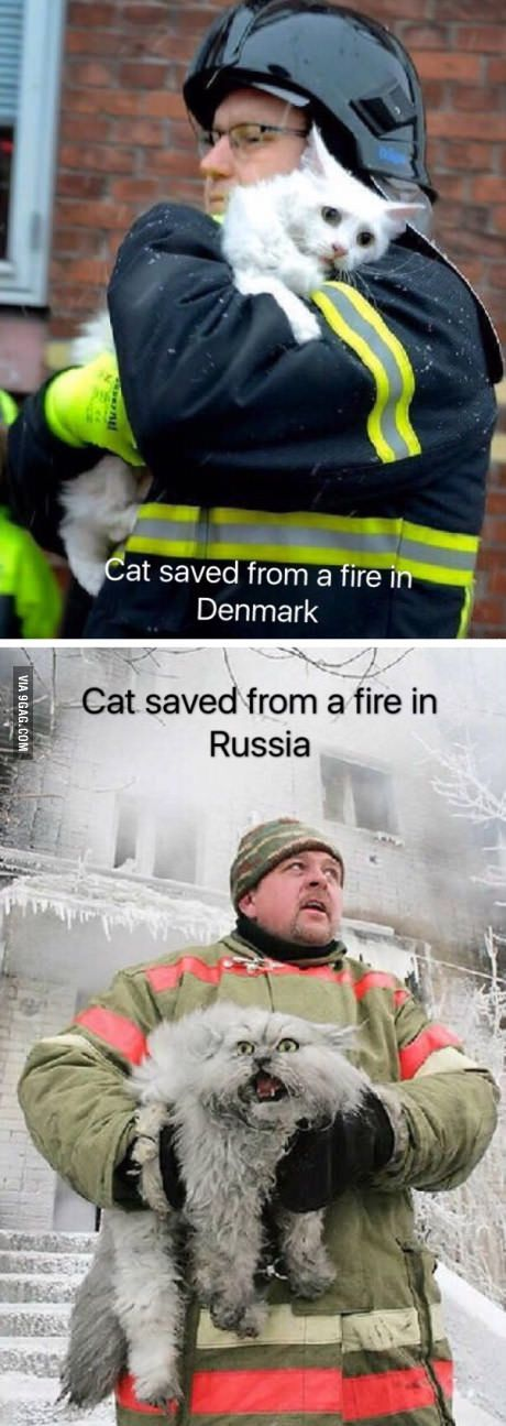 Cat saved from fire in Denmark vs Russia