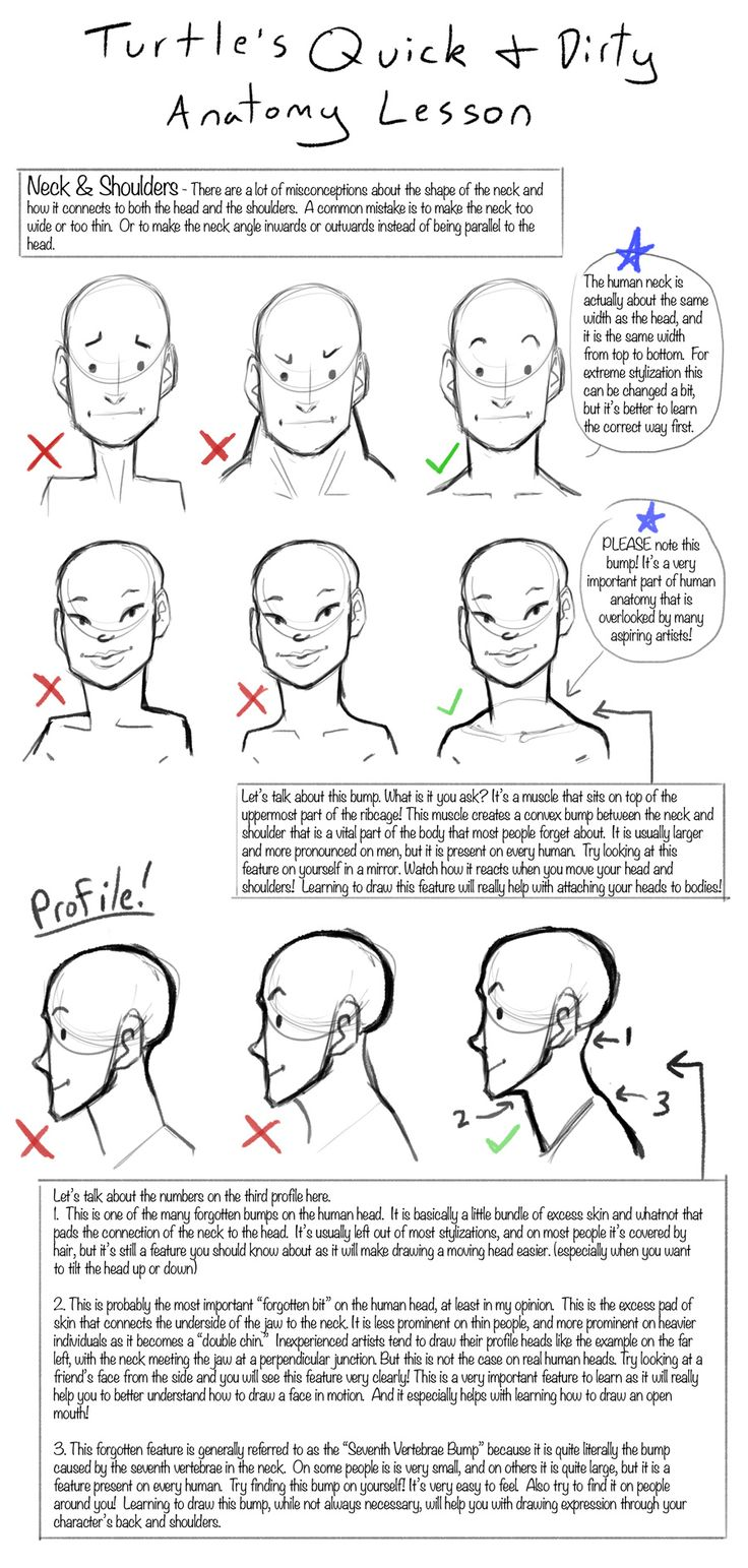 Q+D Anatomy Lessons- Neck and Shoulders by *Turtle-Arts on deviantART ★ || CHARACTER DESIGN REFERENCES (https://www.facebook.com/CharacterDesignReferences & https://www.pinterest.com/characterdesigh) • Love Character Design? Join the Character Design Challenge (link→ https://www.facebook.com/groups/CharacterDesignChallenge) Share your unique vision of a theme, promote your art in a community of over 25.000 artists! || ★