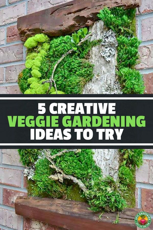 5 Creative Vegetable Garden Ideas Vegetable Garden Design Home