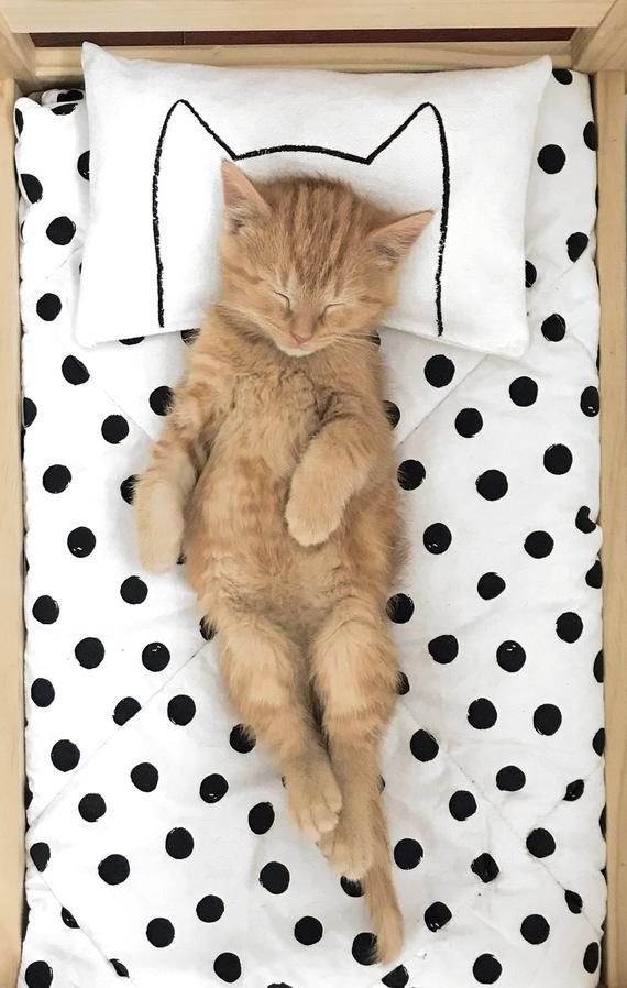 Catnip Kitten Cat Pillow Toy That Fits Ikea Duktig Doll Beds By Xenotees Cute Gift For Cats And Cat Lovers Cat Bed Cats And Kittens Kitten Adoption
