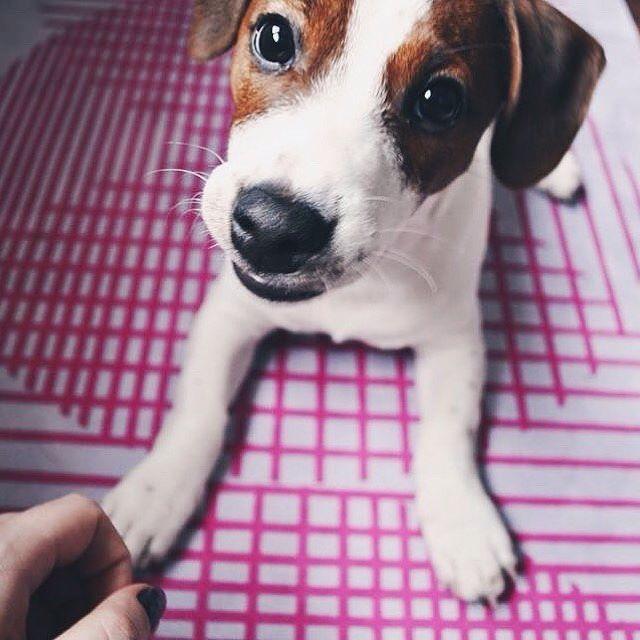 Little friend on our yoga mat  #teammiamiko   #yoga #yogi #yogamat #yogagirl #yogalove #yogachallenge #style #yogaeverydamnday #joga #poland #polska #warsaw #warszawa #morning #inspiracje #inspiration #motywacja #motivation #fit #fitgirl #fitness #passion #pilates #polishgirl #workout #treningi #training #dog #jackrussel #pet #cute