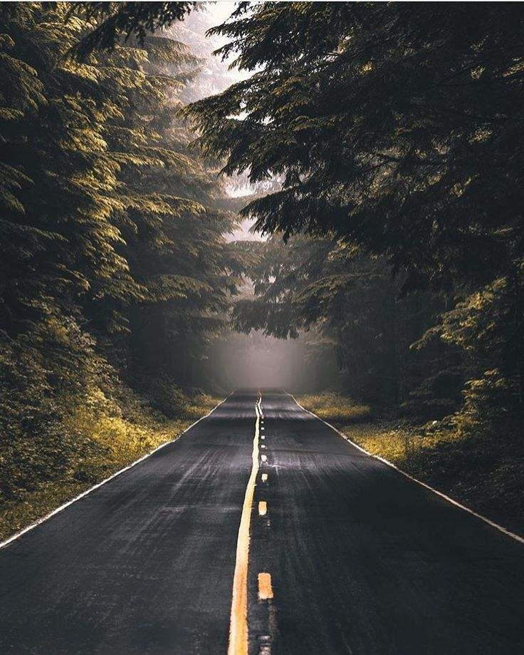 The road to Larch Mountain (Oregon) by Thatcher (@idkpdx) on Instagram