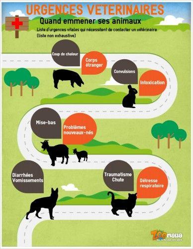 #infographie d'#urgences #veterinaires #chien #chat #zoomalia