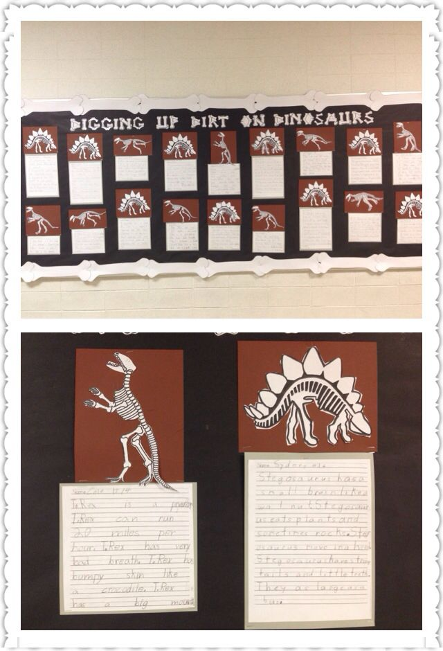 Dinosaur facts bulletin board