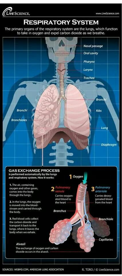 Respiratory gas exchange