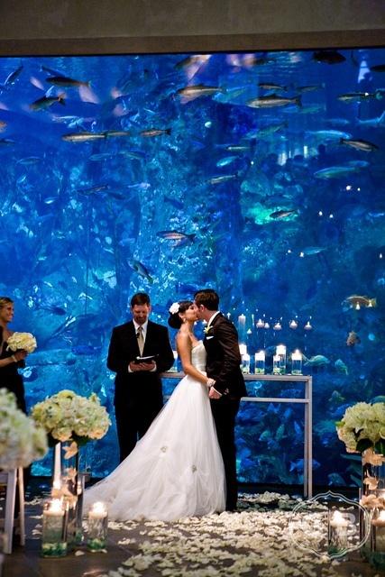 Stunning Aquarium Wedding Ceremony Aquariums