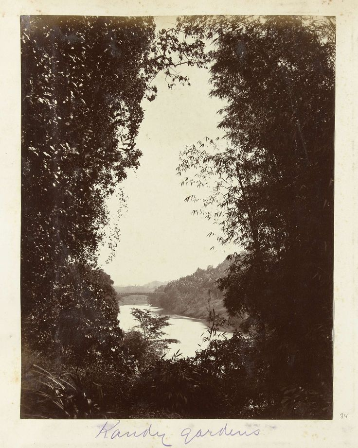 Zicht over de rivier en de botanische tuinen van peradinya in Kandy, anonymous (possibly), c. 1890 - c. 1910 gelatin silver print, h 280mm × w 200mm Nederlands-Indië en de reis daarnaartoe  The artist seems to have removed the color you would expect to see in a picture like this.  I think they wanted to down play the beauty and present it as sad.