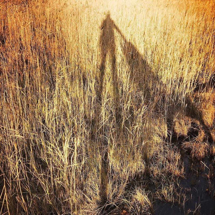 Gold #helsinki #autumn #shadow #igershelsinki