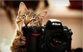 $2,500 James Alan Cox Scholarship for student photographers. Deadline Nov. 15: Picture, Cats, Animals, Photographer, Funny, Cheese, Nikon, Photography, Cameras