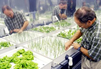 Hydroponic Gardening Systems for Beginners - Grow Hydroponic Vegetables  this maybe the way to go for allergy sufferers