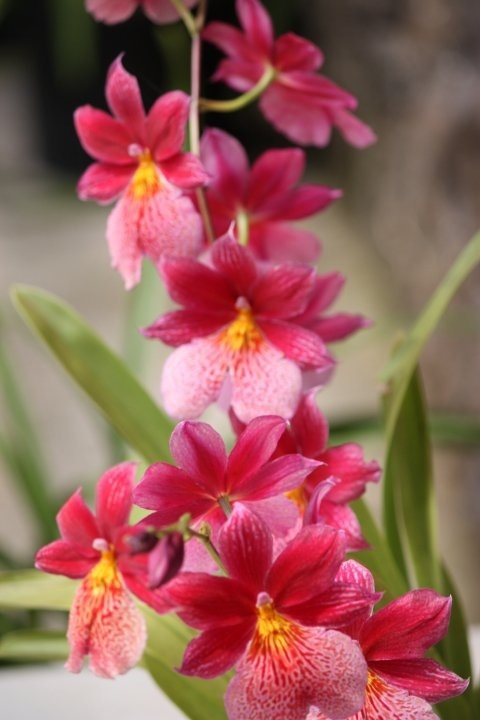 best hawaiian flowers images on, Natural flower