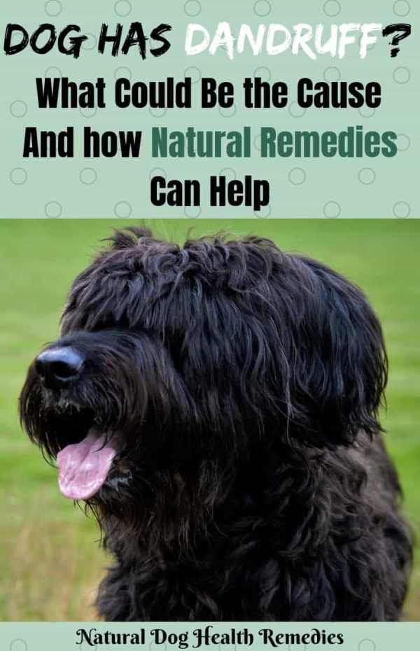 Dog Dandruff Home Remedies Dog Dandruff Home Remedies For Dandruff Dog Dry Skin