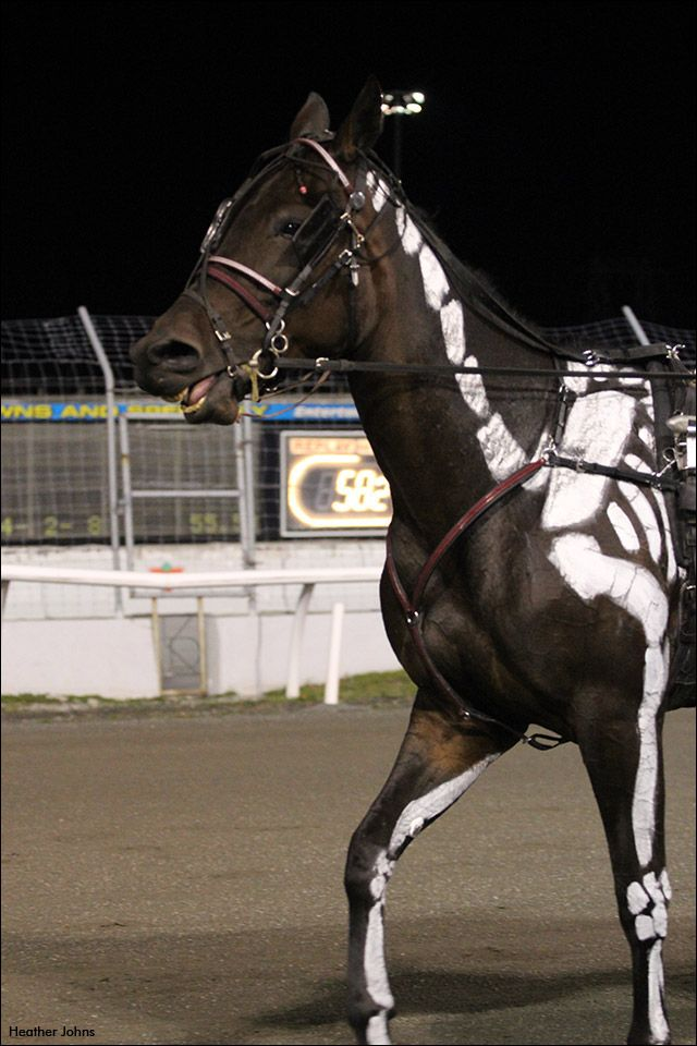 Harness Racing S Spookiest Horse Standardbred Canada