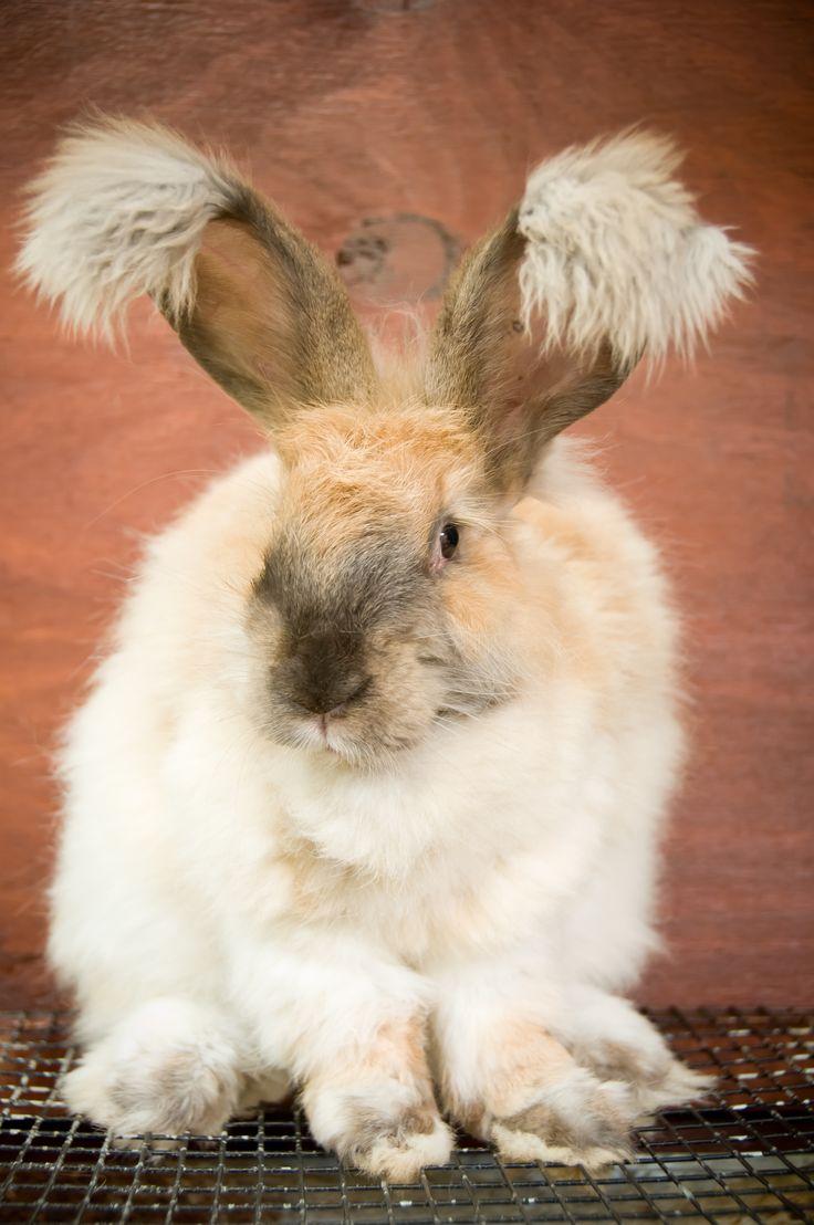 image Who doesnt like rabbits