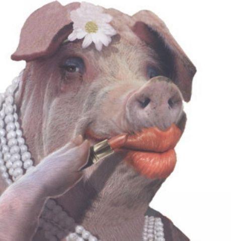"""Résultat de recherche d'images pour """"pictures of a pig in shit"""""""