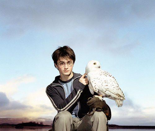 Hogwarts Alumni Harry And Hedwig