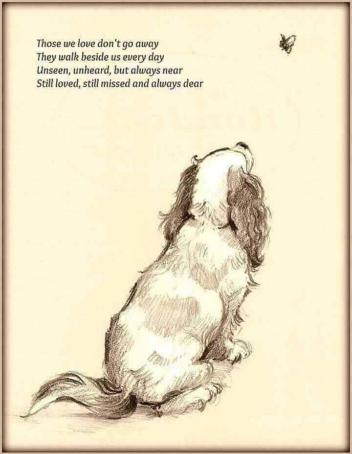 My best-ever dog, Rocky, an exuberant field-bred English Springer Spaniel, has been gone for many years, but I still think about him every day.