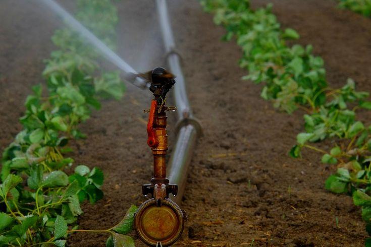 Viete aký je najlepší spôsob zavlažovania vašej záhradky či trávnika? https://www.pvmsystem.sk/ako-vybrat-vhodny-sposob-pre-zavlazovanie-travnika-