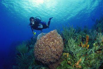 """""""lugares_turisticos_de_Mexico_arrecife"""": Ideas For, Arrecife Veracruzano, Wish To Visit"""
